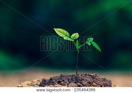 Planting Seedlings Young Plant In The Morning Light On Nature Background