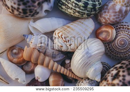 Seashell Background. Lots Of Different Seashells Piled Together. Seashells Collection. Closeup View