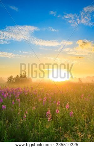 Beautiful Rural Landscape With Sunrise  And  Blossoming Meadow. Purple Flowers Flowering On Spring F