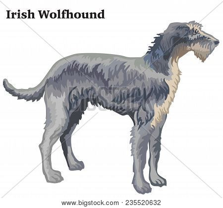 Colorful Decorative Portrait Of Standing In Profile Irish Wolfhound, Vector Isolated Illustration On