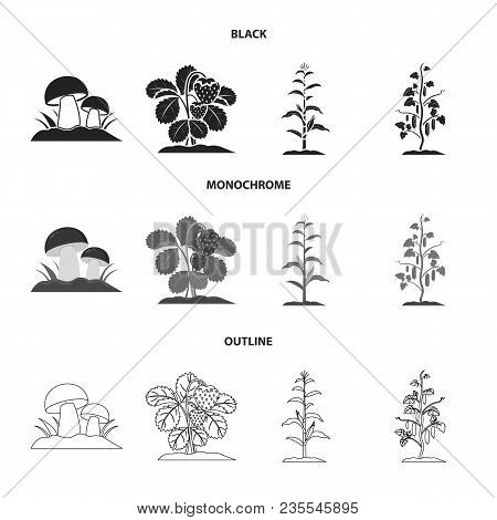 Mushrooms, Strawberries, Corn, Cucumber.plant Set Collection Icons In Black, Monochrome, Outline Sty