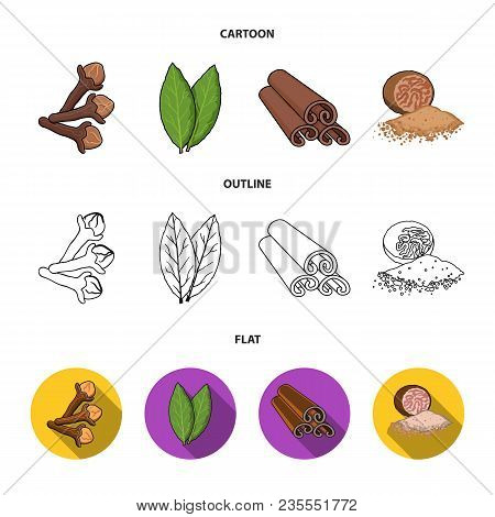 Clove, Bay Leaf, Nutmeg, Cinnamon.herbs And Spices Set Collection Icons In Cartoon, Outline, Flat St