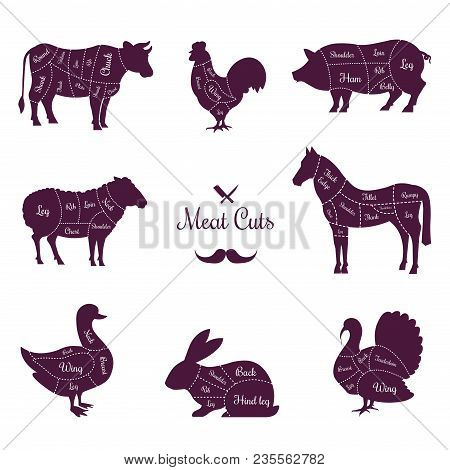 Meat Cuts Poster With Named Animals Body Parts. Butchery Shop Commercial Banner. Livestock And Poult