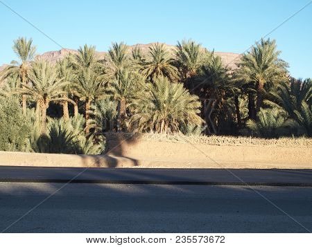 Asphalt Road At Oasis Landscapes Of Green Palm Trees In Central Morocco In Old Oulad Village Near Za