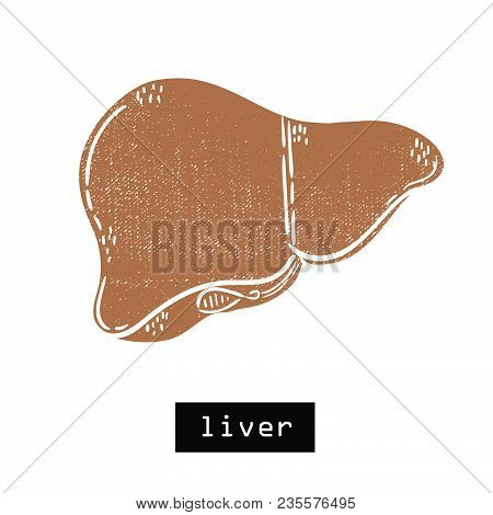 Vector Hand Drawn Illustration. Liver Body. Idea For Poster, Postcard, Design.