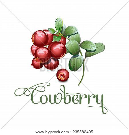 Set Of Wild Northern Berries Lingonberry Foxberry, Cowberry , Cranberry. Simplified, Reduced Both De