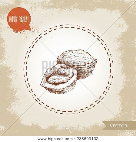 Hand Drawn Sketch Style Walnuts Composition. Eco Food Ingredient Vector Illustration Isolated On Old