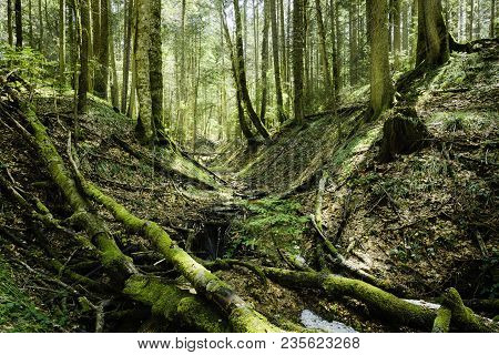 Bright Green Forest In Day Light.. Small Stream Through Vivid Green Forest. Peaceful Green Forest Tr