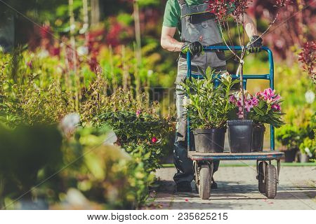 Spring Garden Plants Shopping. Gardener With Cart Full Of Plants And Flowers For His Garden.