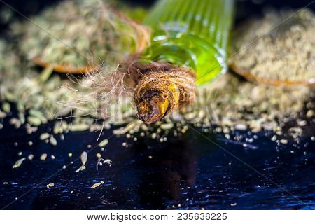 Closes Up Of Essential Oil Of Raw Fresh Fennel Seeds With Raw Fennel Seeds In A Transparent Bottle O