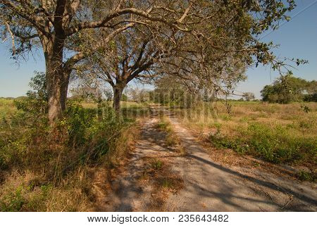 South Florida Landscapes / View Of The South Central Landscape Of Southern Florida