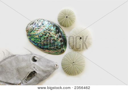 Fish And Ocean Objects.
