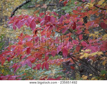 Close Up Of A Profusion Of Vibrant Colors Of Autumn In The Forest