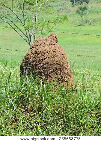 Large Termite Mound In The Fields Of A Farm