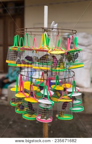 Singing birds in the cages at street vendor shop in Bali, Indonesia