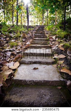 Old Staircase In The Middle Of The Forest.