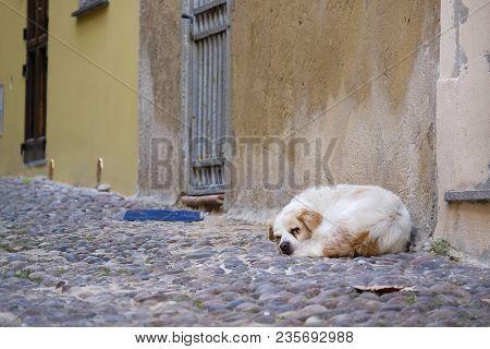 Stray Dog Is Sleeping On The Street Of Cobblestones