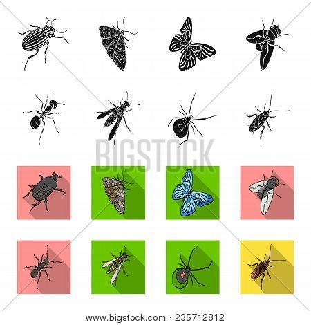 An Insect Arthropod, An Osa, A Spider, A Cockroach. Insects Set Collection Icons In Black, Flet Styl