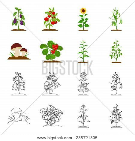 Mushrooms, Strawberries, Corn, Cucumber.plant Set Collection Icons In Cartoon, Outline Style Vector