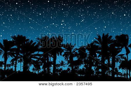Palm Under Stars