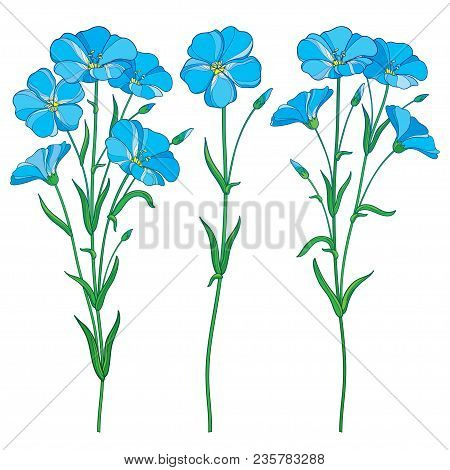 Vector Set With Outline Blue Flax Plant Or Linseed Or Linum Flowers Bunch, Bud And Green Leaf Isolat
