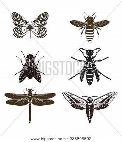 Vector Set Of Butterfly Silhouettes, Fly, Bee, Wasp, Dragonfly And Moth Isolated On White Background