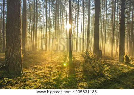 Bright Sun Rays Through Trees In Green Spring Forest. Landscape Of Forest In Early Morning. Natural