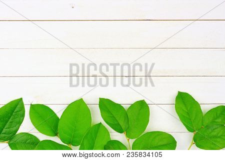 Vibrant Green Leaves On A White Wood Background. Bottom Border. Minimal Nature. Flat Lay. Top View.