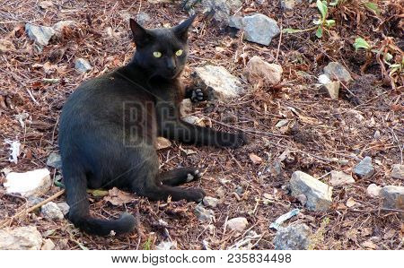 Black Cat Stray In A Dirty Clearing