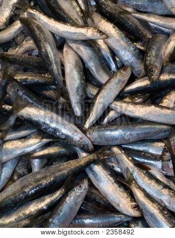 sardines at the local market Thessalon?ki Northern Greece poster