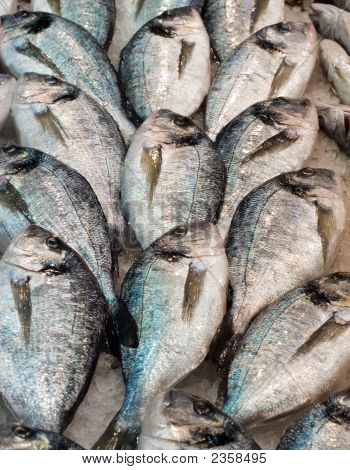 daurade fishes at the local market Thessaloniki Northern Greece poster