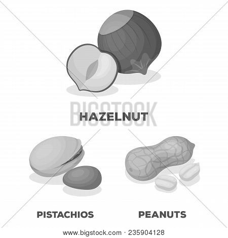 Different Kinds Of Nuts Monochrome Icons In Set Collection For Design.nut Food Vector Symbol Stock