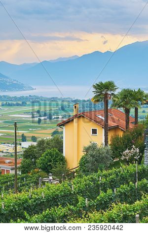 Evening View Of Rural Southern Switzerland With Houses, Farms, Vineyards, Alps Mountains And Lake Ma