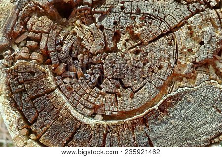 Old Stump Pattern Top View. Aged Stump Surface Background. Nature Pattern Background.