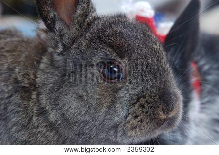 Close Up Snout Rabbit