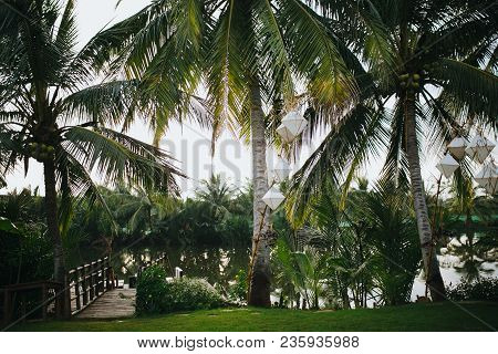 Beautiful Green Palm Trees With White Lanterns Hanging On Branches And Calm Pond In Park, Hoi An, Vi