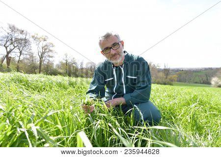 Farmer in field checking crops