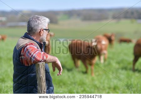 Farmer standing in field with cattle in background