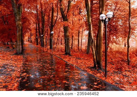 Fall Landscape. Red Fall Trees And Fall Leaves On The Wet Footpath In Park Alley After Rain. Creativ