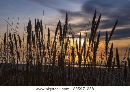 Tall Dunes With Dune Grass And A Wide Beach Below. Shot On A Sunset Over The Baltic Sea.