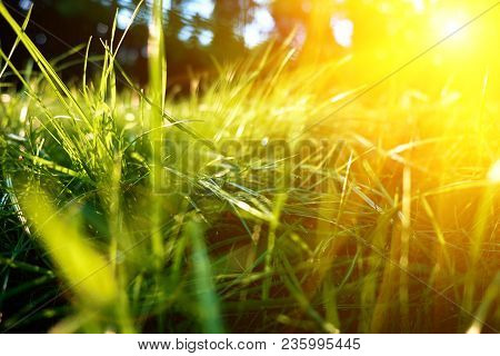 Green Grass Background, Toned Bright Grass Closeup View With Sun Beams And Lens Flare.