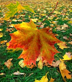 Image Of Autumn Leaves In Park Closeup