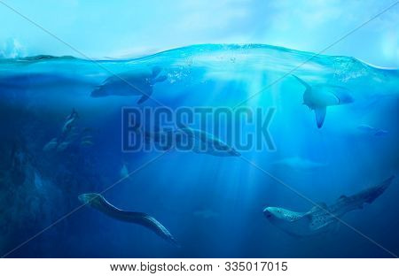 Ocean underwater with marine animals. Hunting sharks. Ecosystem. Life in tropical waters.