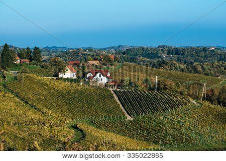 Beautiful Vineyards Of Stajerska Slovenia, Wine Producing Area. View Of Green Vineyards, Rolling Hil