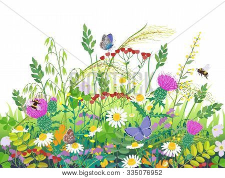 Floral Composition Made With Summer Meadow Plants And Insects. Grass, Colorful Wild Flowers,  Bumble