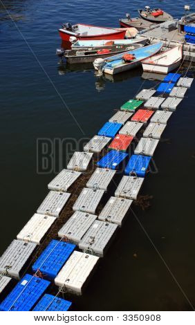 Lobster Crates Floating At Dock
