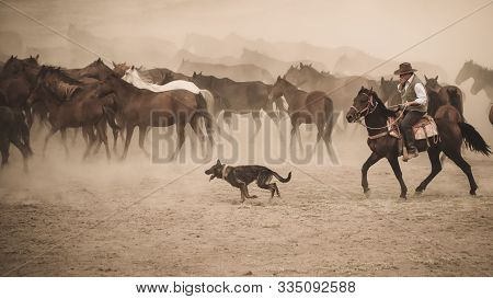 Kayseri, Turkey - November 2019: Horses Running And Kicking Up Dust With A Shepherd Man On Horse And