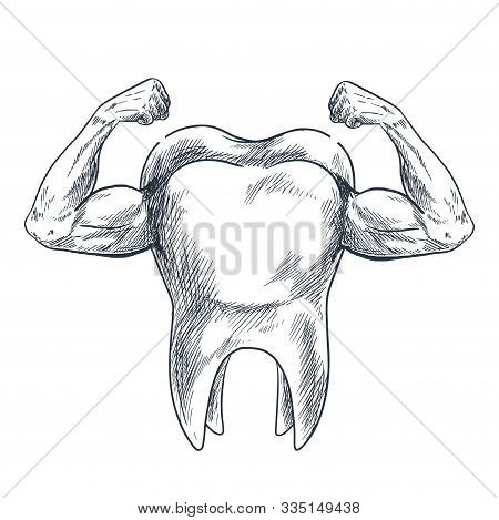 Molar With Arms And Strong Biceps, Hand Drawn