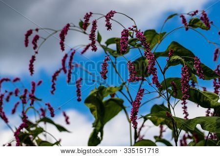 View Of Small Pink Flowers On The Blue Sky Background. Photography Of Lively Nature.