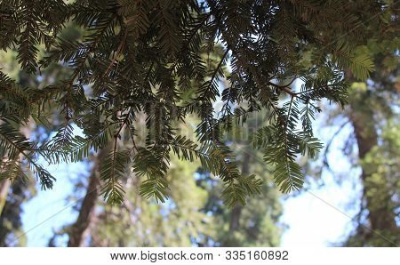 Close Up Of Green Tree Branch With Blue Sky Background